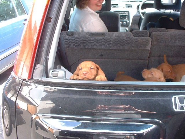 puppies in back of car
